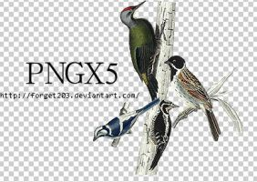 pngs:birds by forget203