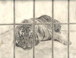 Caged by MaybeItWillWork