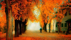 forever autumn.. by kriakao