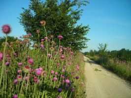 Thistles along the Road by willowtree123