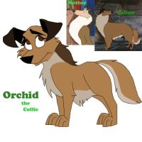 Orchid the Collie by WolffNoelle