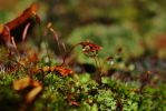 Moss, Sporophytes and Raindrop by PsychodelicMess