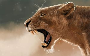 Roar (study based on a pkoto) 30 minutes by Clooms