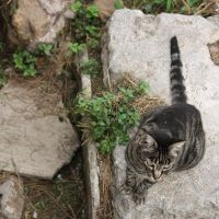In Rome Even Cats Are Elegant by Ilman-Lintu