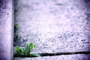 LIFE by iso-50
