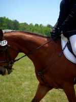 Horse shows by Apollos-Foxhunt
