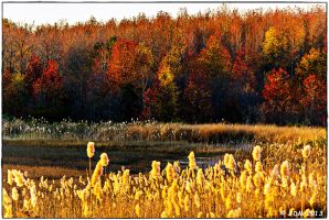 Fall Colors by JDM4CHRIST