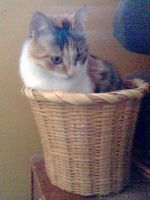Look at me in my basket by danimore95