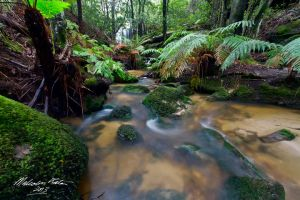 The Flow by FireflyPhotosAust