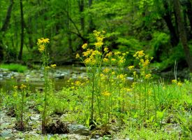 Creek weeds.img532 by harrietsfriend