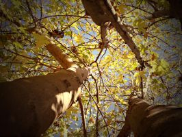 Branches by Mechpics