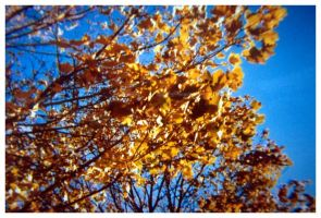 yellow leaves by fraserw2
