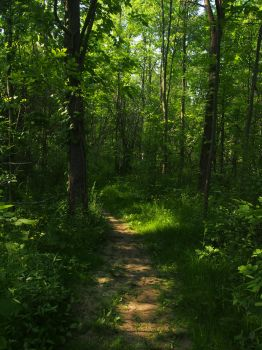 Forest Path 1 by AllStock