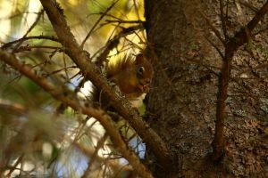 Squirrel by TearsofEndearment