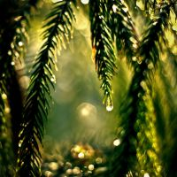 Pine fresh by siddhartha19