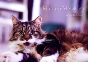 Bright Eyes by MadamMewMew