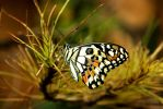 Butterfly in the Garden by Androgs