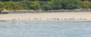 Seaguls on the Shore by Foxiwan