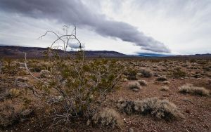 Winter in the Desert by nathanspotts