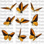 Butterfly Stock 11 by Shoofly-Stock