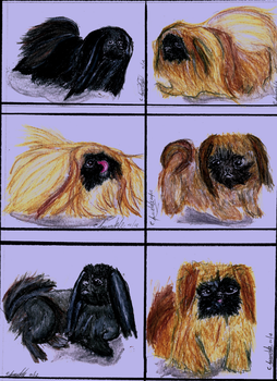 A Study in Pekingese by Ratchets-sparkling