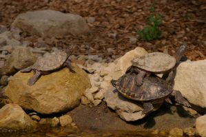 Turtle III by expression-stock