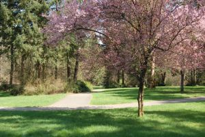 Pink Tree with Path in Park by happeningstock