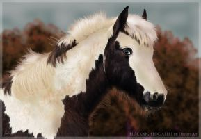 Young Gypsy Horse by BLACKNIGHTINGALE81