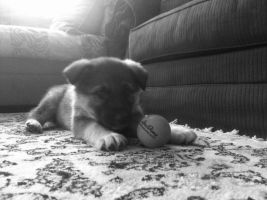 A Pup and His Ball by KurGuardianz