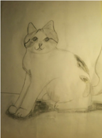 Random Cat Sketch On Paper by LittleOrca20