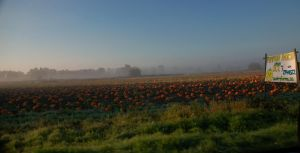 Pumpkin Patch by imisslife