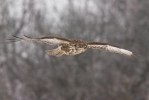 In flight by JMrocek