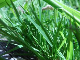 Stock - Grass #1 by MrDragonfyr-Stock
