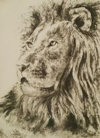 Lion by beccalynch
