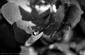Depth of a drop by SamanthaRoseCPhoto