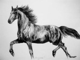 Drawing friesian horse by Ennete