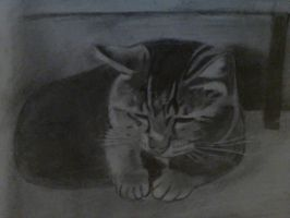 My cat by ImTheOneConfused