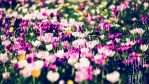 Spring is here 1 by calimer00