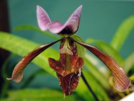 Hungry orchid 2 by fosspathei