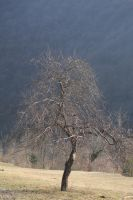 lonely tree by rok993
