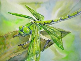 Dragonfly by tomoyo696