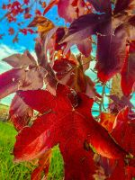 Colors of Autumn by Izzie-Hill