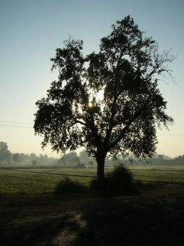 A Morning in Rural Punjab by ZaGHaMi
