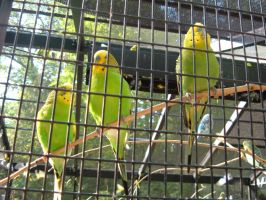 parakeets 2 by we-are-the-remnants
