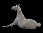 white-gray horse precut by JuneButterfly-stock