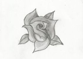 Black And White Rose by Hot-Chelle-Raelian