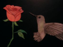 Humming Bird and Rose by Adillenb7