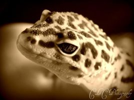 leopard gecko by cheshirecat84