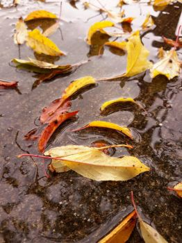 Fall Leaves on Concrete by Sfyx