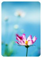 Picotte Cosmos by ailenn